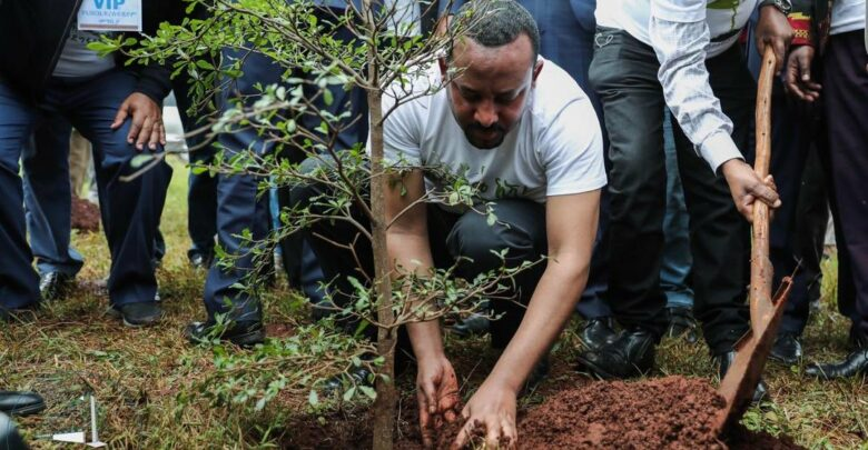 Ethiopia Sets New Record Of Planting More Than 350 Million Trees In A Day
