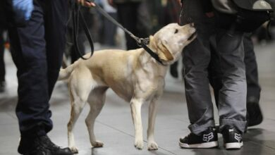 U.S. To No Longer Send Bomb-Sniffing Dogs To Jordan, Egypt After Multiple Deaths