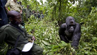 DRC: At Least 16 Rangers, Civilians Killed In Armed Attack On Virunga National Park