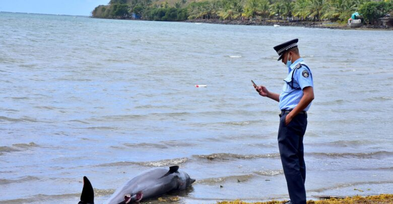 Mauritius: At Least 40 Dolphins Found Dead In Area Affected By Oil Spill