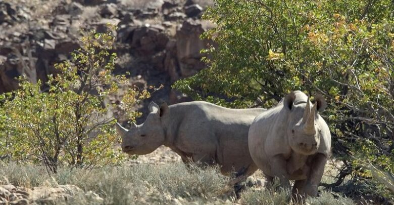 Namibia: Rhino poaching Cases Falls By Over 60 Percent On Tougher Policing, Penalties